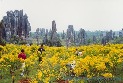 石林科学研究