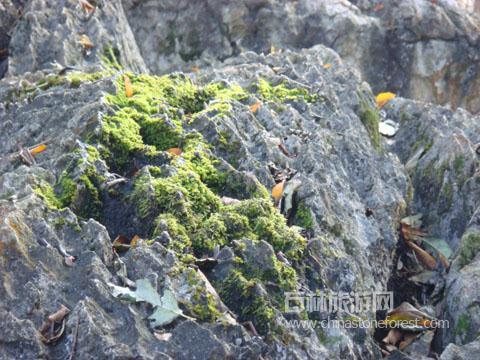 岩石上的小生命:苔藓与藻类