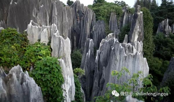 """被称为""""世界喀斯特地貌的精华"""",云南石林到底有多特别?"""